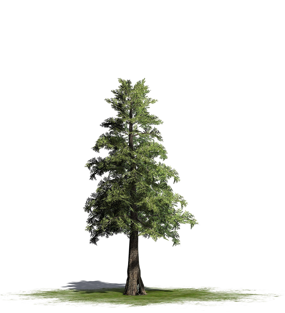 tree_timber